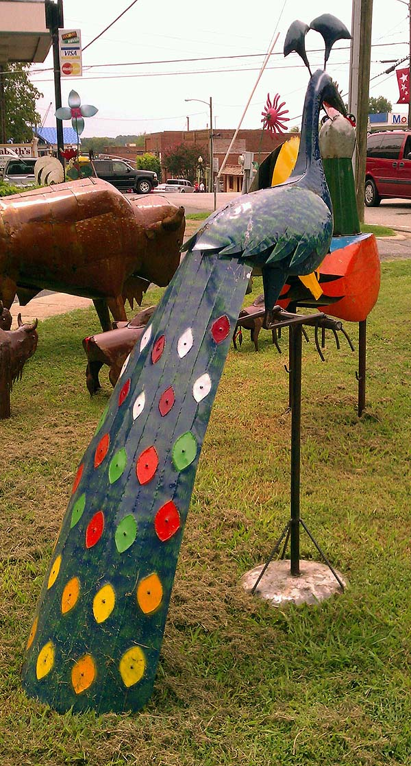 The north end of a peacock headed south (west), at French Connection in Pittsboro, NC. The peacock is looking at a chicken. You can just barely see the tarp-covered roof of the Chatham County Courthouse, between the time it burned and was restored.